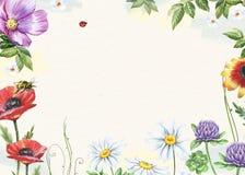 Blom- ram för vattenfärg med vallmo, växt av släktet Trifolium, kamomillar och biet Royaltyfria Foton