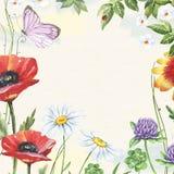 Blom- ram för vattenfärg med vallmo, växt av släktet Trifolium, kamomillar och fjärilen Arkivbilder