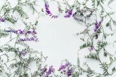 Blom- ram som göras av lösa blommor på vit bakgrund sommar för snäckskal för sand för bakgrundsbegreppsram Lekmanna- lägenhet, bä Royaltyfri Foto