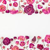 Blom- ram som göras av rosa rosor och knoppar på vit bakgrund red steg Lekmanna- lägenhet, bästa sikt Fotografering för Bildbyråer