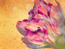 Blom- rambakgrund för tappning. EPS 10 Royaltyfri Fotografi
