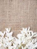 Blom- ramdesign med naturligt begrepp för kopieringsutrymme Arkivbilder