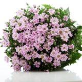 blom- rosa nätt för bukett royaltyfri foto