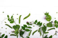 Blom- ?rtartad bakgrund Stammen f?r den gr?na ?rtan med lilor blommar och spricker ut, fr?skidor p? vit bakgrund arkivbilder