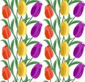 Blom- sömlös bakgrundsmodell med tulpan Dragen hand för illustration för vektor för vårblommablomning Royaltyfria Bilder