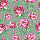 Blom- sömlös modell för tappning med rosa pioner för blomning, på grå bakgrund Arkivbild