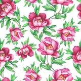 Blom- sömlös modell för tappning med rosa pioner för blomning, på vit bakgrund Dragen elegansvattenfärghand måla illustra stock illustrationer
