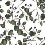 Blom- sömlös modell för vattenfärgstil med eukalyptuns Handen målade modellen med filialer och sidor av silverdollaren och blått royaltyfri illustrationer