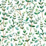 Blom- sömlös modell med eukalyptusfilialer Royaltyfri Foto