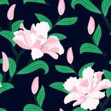 Blom- sömlös vektormodell med pionblommor Royaltyfria Bilder