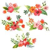 Blom- samling för vattenfärg Royaltyfri Foto