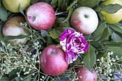 Blom- sammansättning med nyanserade rosor och frukter Royaltyfri Bild