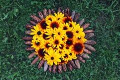 Blom- sammansättningsbakgrund växt för Svart-synad susan eller Rudbeckiahirta, bruna betty, gloriosatusensköna, guld- Jerusalem arkivbilder