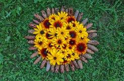 Blom- sammansättningsbakgrund växt för Svart-synad susan eller Rudbeckiahirta, bruna betty, gloriosatusensköna, guld- Jerusalem arkivfoto