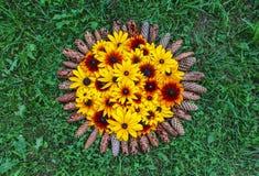 Blom- sammansättningsbakgrund växt för Svart-synad susan eller Rudbeckiahirta, bruna betty, gloriosatusensköna, guld- Jerusalem royaltyfri bild