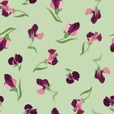 Blom- seamless bakgrund från blommor Fotografering för Bildbyråer