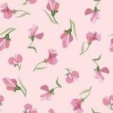 Blom- seamless bakgrund från lila blommor Fotografering för Bildbyråer