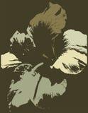 blom- serie för bakgrund Royaltyfria Bilder