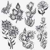 blom- set för designelement Fotografering för Bildbyråer