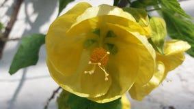Blom- skärm royaltyfri fotografi
