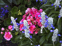 Blom- skönhet på de Butchart trädgårdarna Royaltyfria Bilder