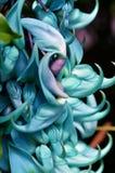 Blom- skulptur Jade Vine Royaltyfria Bilder