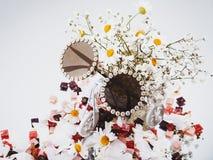 Blom- solglasögon och blommor på en ljus bakgrund royaltyfria foton