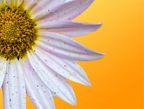 Blom- soluppgång Royaltyfri Bild