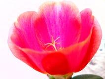 Blom som drömmar Arkivfoto