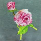 Blom- sommar för röd rosa vattenfärg, vårbakgrund färgrik ros Fotografering för Bildbyråer
