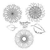 Blom- symmetrisk sommarblommauppsättning Utdragen gerbera för hand, solros, översiktsvektorillustration på vit bakgrund Samling vektor illustrationer