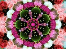 Blom- tapet för blomma royaltyfri fotografi
