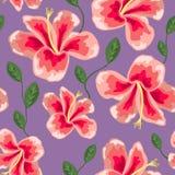 Blom- textur med den stilfulla sömlösa hibiskusmodellen Arkivbilder