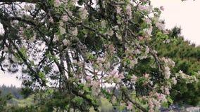 Blom- träd på blåsig dag stock video