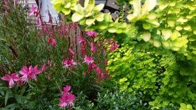 Blom- trädgård för rosa färger och Limefrukt-gräsplan Royaltyfria Bilder