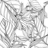 Blom- tropisk bakgrund för klotter i vektor med den svartvita färga sidan för klotter Paradise blommor, banansidor royaltyfri illustrationer