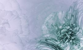 Blom- turkos-blått bakgrund Blommor av turkos-vit nejlikor Närbild festlig vykort Arkivfoton