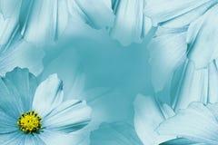 Blom- turkos-vit härlig bakgrund vita tulpan för blomma för bakgrundssammansättningsconvolvulus Vit-turkos blommatusensköna Kronb Arkivfoto