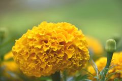 Blom under solskenet arkivfoto