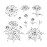 Blom- uppsättning för utdragna illustrationer stock illustrationer