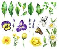 Blom- uppsättning för vattenfärg Royaltyfri Foto