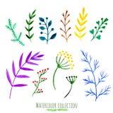 Blom- uppsättning för vektor Färgrik blom- samling med sidor och filialer, vattenfärgmålning Isolerade designbeståndsdelar för in