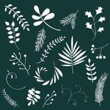 Blom- uppsättning med växter Sommarsidor royaltyfri illustrationer