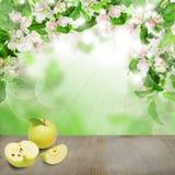 Blom- vårbakgrund med Apple frukt Royaltyfri Bild