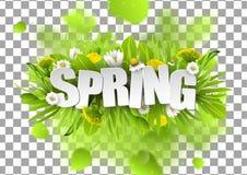 Blom- vårbakgrund med maskrosor och kamomillar på genomskinlig rasterbakgrund Royaltyfri Fotografi