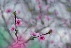 Blom- vårgränsbakgrund inbjudan Dekorativ modell för pappers- kort Gräns- eller ram- och kopieringsutrymme textur Fotografering för Bildbyråer