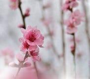 Blom- vårgränsbakgrund inbjudan Dekorativ modell för pappers- kort Gräns- eller ram- och kopieringsutrymme textur Royaltyfri Fotografi