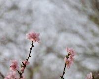 Blom- vårgränsbakgrund inbjudan Dekorativ modell för pappers- kort Gräns- eller ram- och kopieringsutrymme textur Arkivbilder