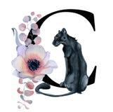Blom- vattenfärgalfabet Design för initial bokstav C för monogram med den hand drog pion- och anemonblomman och den svarta panter Arkivbilder