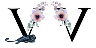 Blom- vattenfärgalfabet Design för initial bokstav V för monogram med den hand drog pion- och anemonblomman och den svarta panter Royaltyfri Fotografi